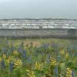052 - Hut and flowers at 4500m