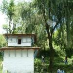 057 - Tree antennae in Ghara